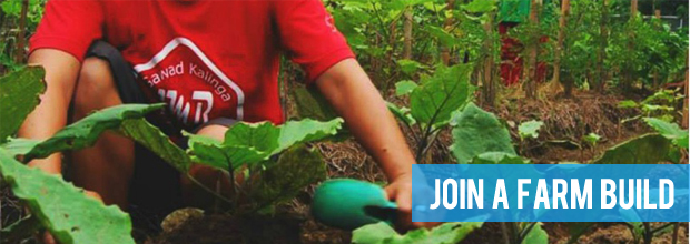 Get your hands dirty in our backyard farm plots
